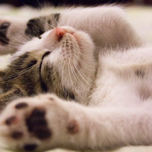animal cat face close up feline