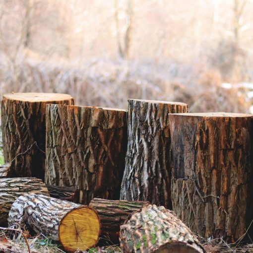 depth of field photography of brown tree logs